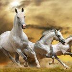 Running Horse Slide