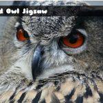 Wild owl Jigsaw